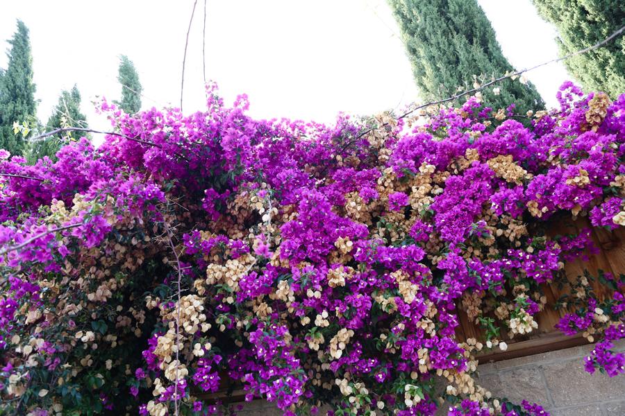 flowersanddots4